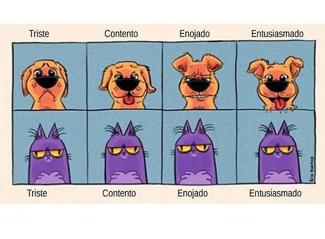 emociones-gato-y-perro