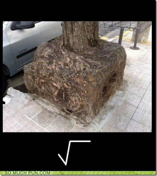 funny-puns-square-root